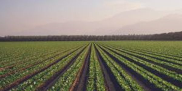 sjv_crops.jpg